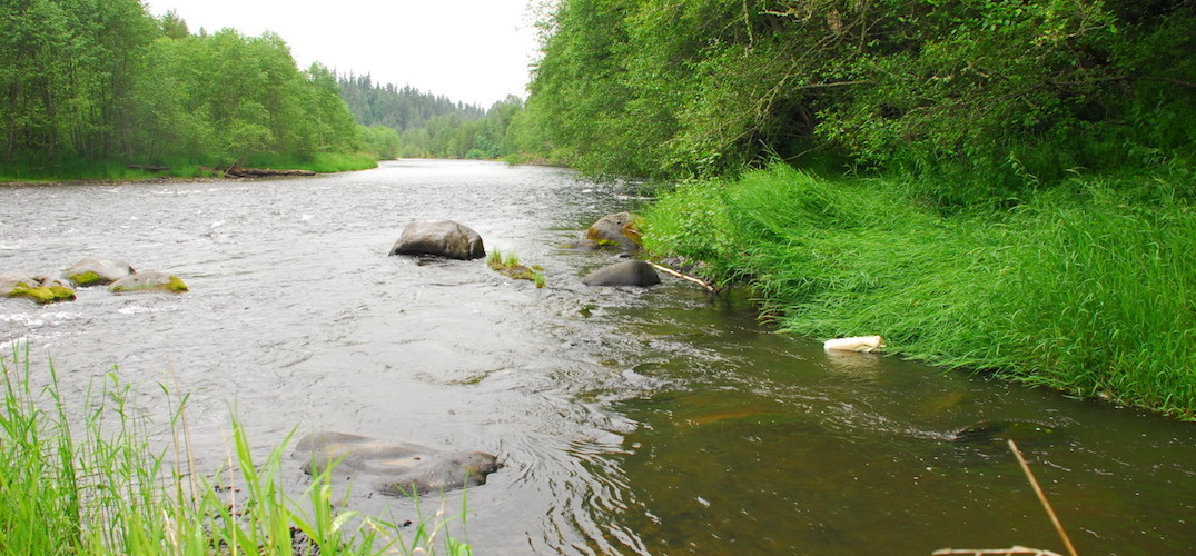 Nisqually river council working to protect and promote for Nisqually river fishing